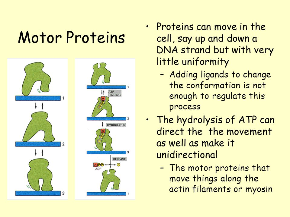 Protein Structure And Function Ppt Download