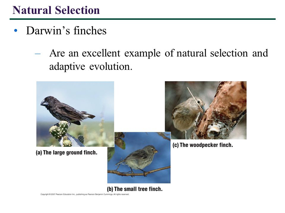 Evolutionary perspective natural selection and adaptive