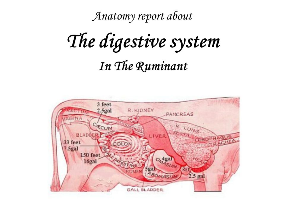a report on the digestive system Conclusion the digestive system starts working as soon as the food touches the lips and is ingested the various organs work together to run this machinery.