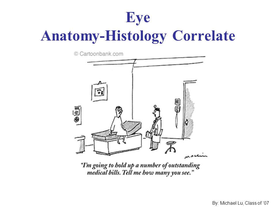 Eye Anatomy-Histology Correlate - ppt video online download