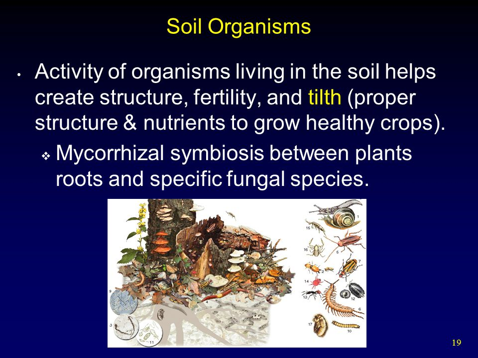 Food and agriculture ppt video online download for Soil organisms