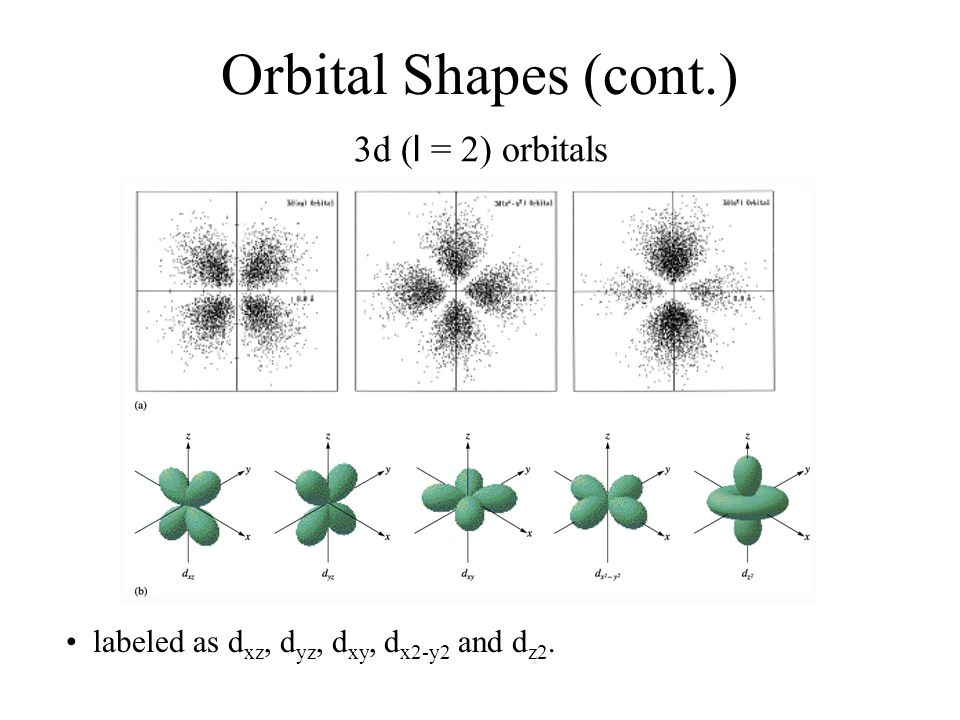 Orbital Shapes (cont.) 3d (l = 2) orbitals