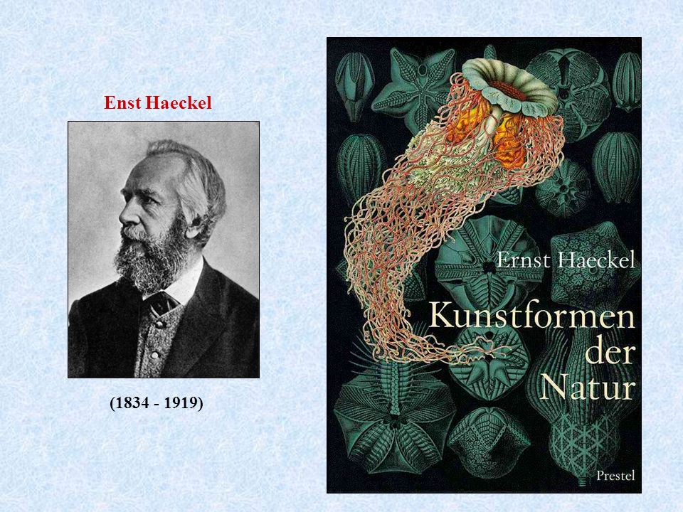 Enst Haeckel (1834 - 1919)