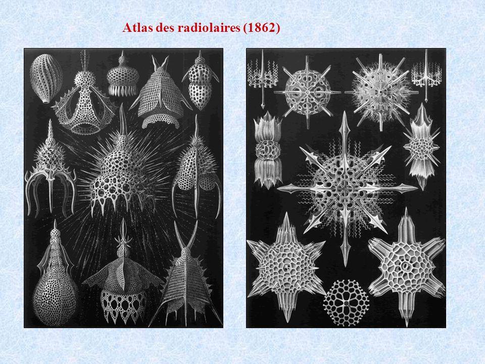 Atlas des radiolaires (1862)