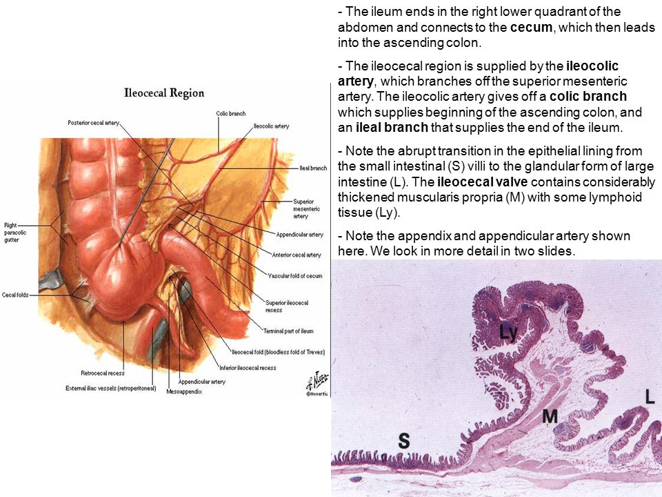 Gi tract anatomy 4229650 - follow4more.info