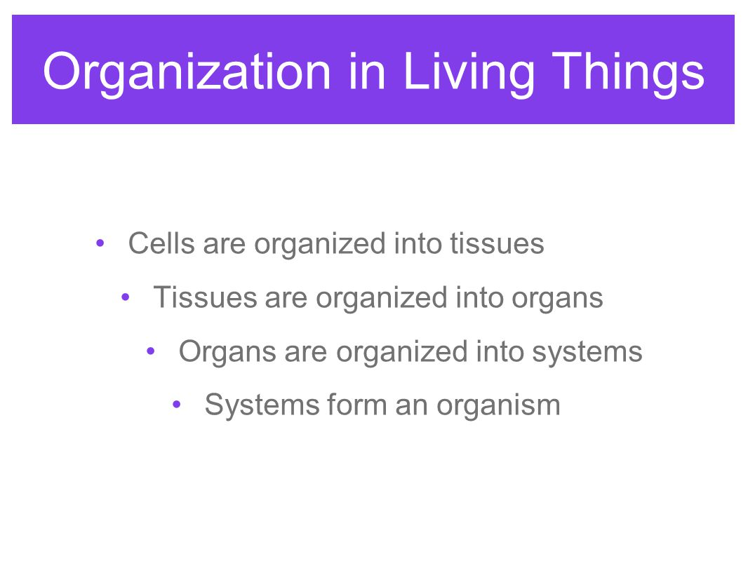 4 things cells do to maintain homeostasis - Organization In Living Things