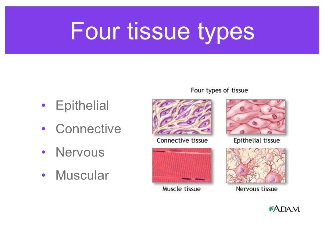 epithelial tissue and its types