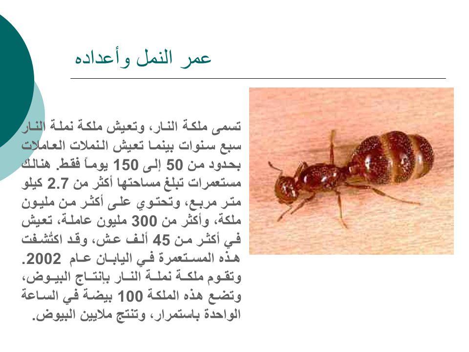 ظهور أخطر نملة في العالم مرة أخري بين البلدات الاسرائيلية وحدوث فزع ورعب بين المواطنين