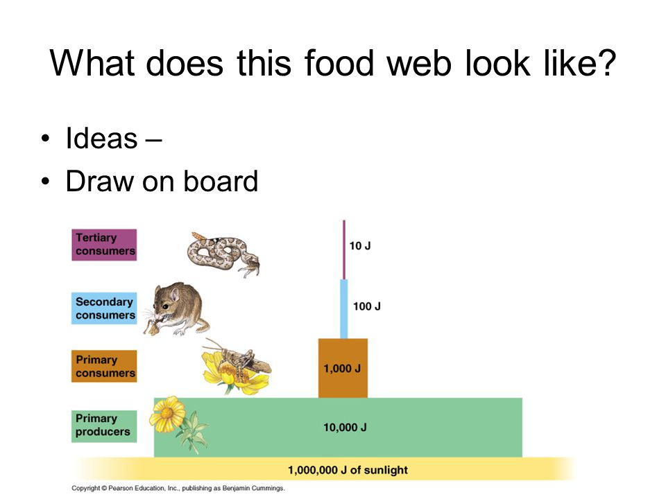 mth221 food webs case study In some cases, students from university science disciplines have sufficient credits  to complete the  212 and chem 234 during your studies at mcgill as outlined in  your program requirements  for more information, please see the department  of chemistry's web page  bree 325 food process engineering (3 credits.