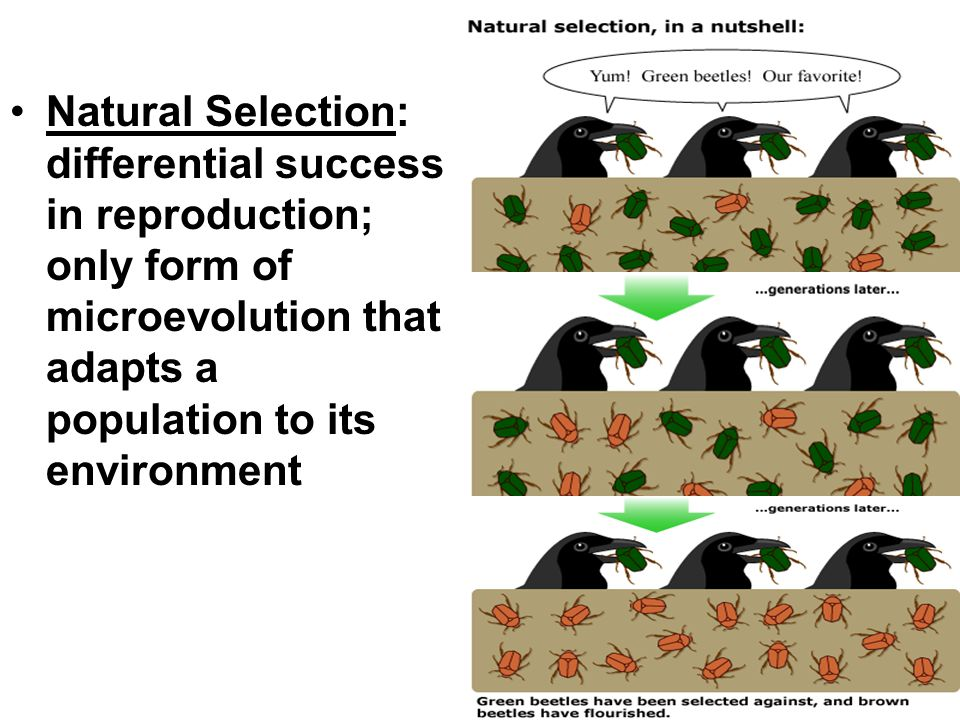 What Do Variation And Natural Selection Allows Populations To Do
