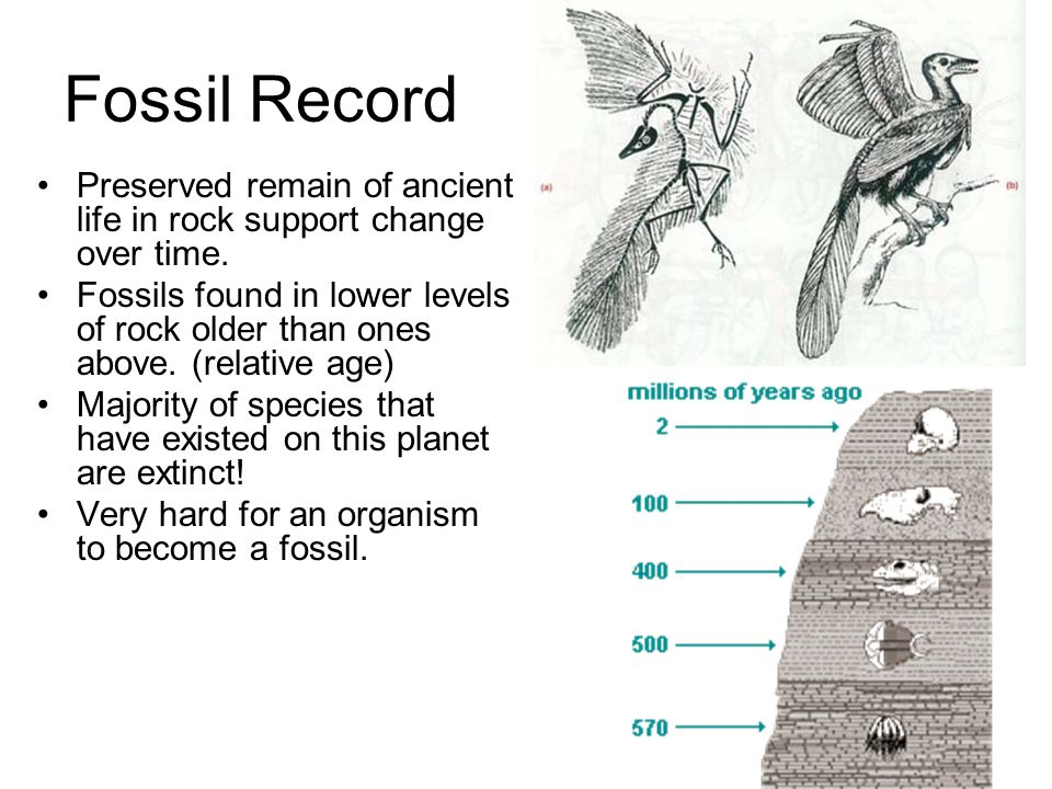 explain how radiometric dating and the fossil record supports the theory of evolution