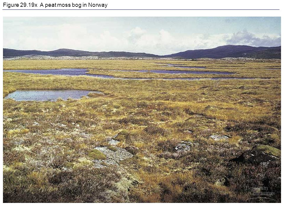 Figure 29.19x A peat moss bog in Norway