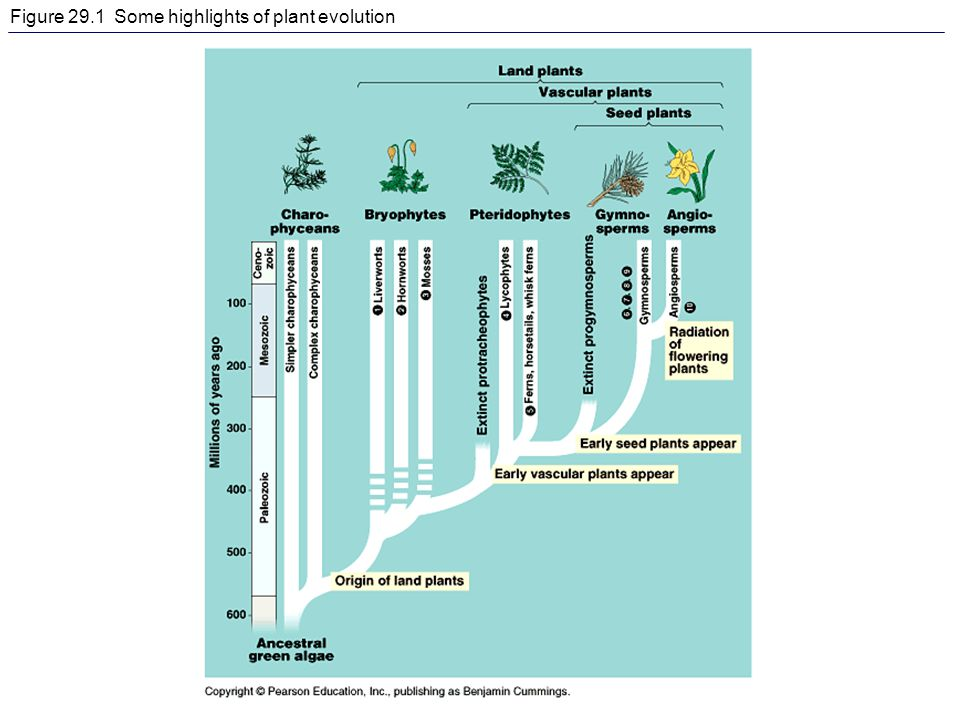 Figure 29.1 Some highlights of plant evolution