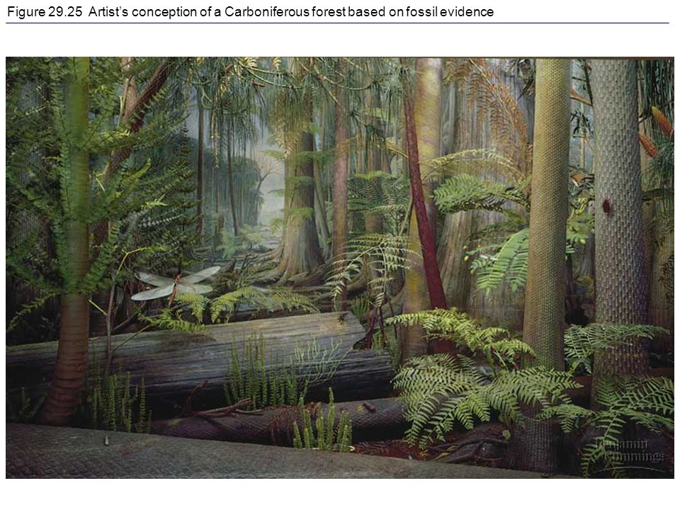 Figure Artist's conception of a Carboniferous forest based on fossil evidence