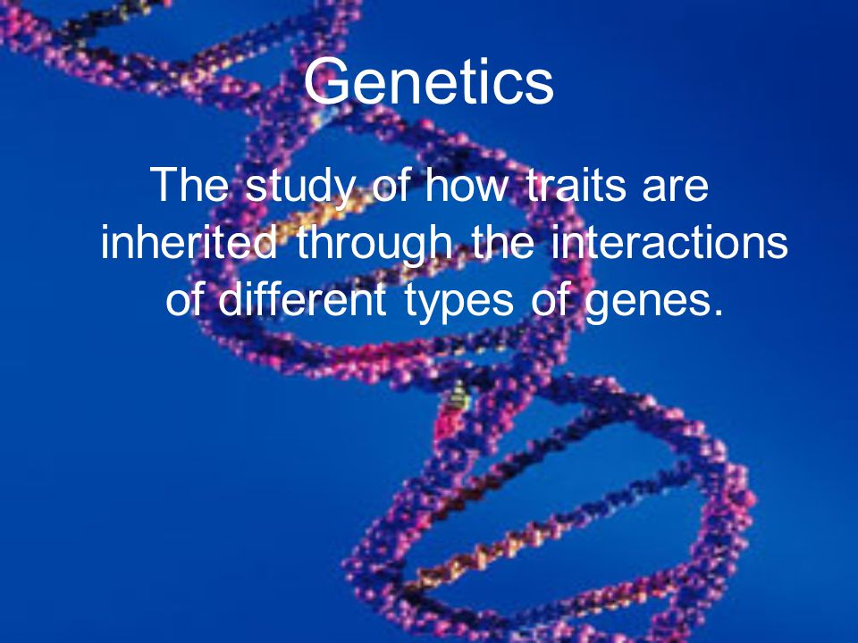 Genetics The study of how traits are inherited through the interactions of different types of genes.