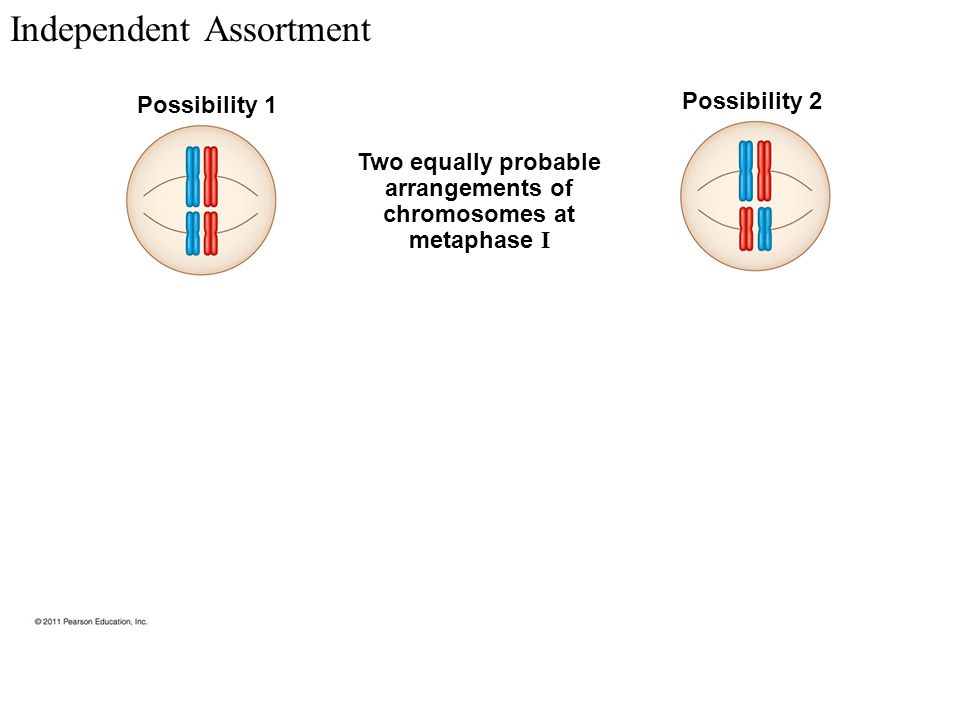 Meiosis. - ppt download
