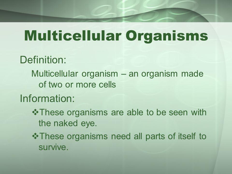 unicellular organisms vs multicellular organisms ppt video online download. Black Bedroom Furniture Sets. Home Design Ideas