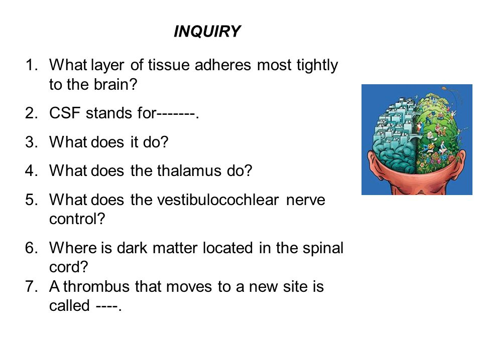 INQUIRY What layer of tissue adheres most tightly to the brain CSF stands for-------. What does it do