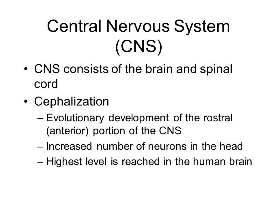 Central Nervous System (CNS)