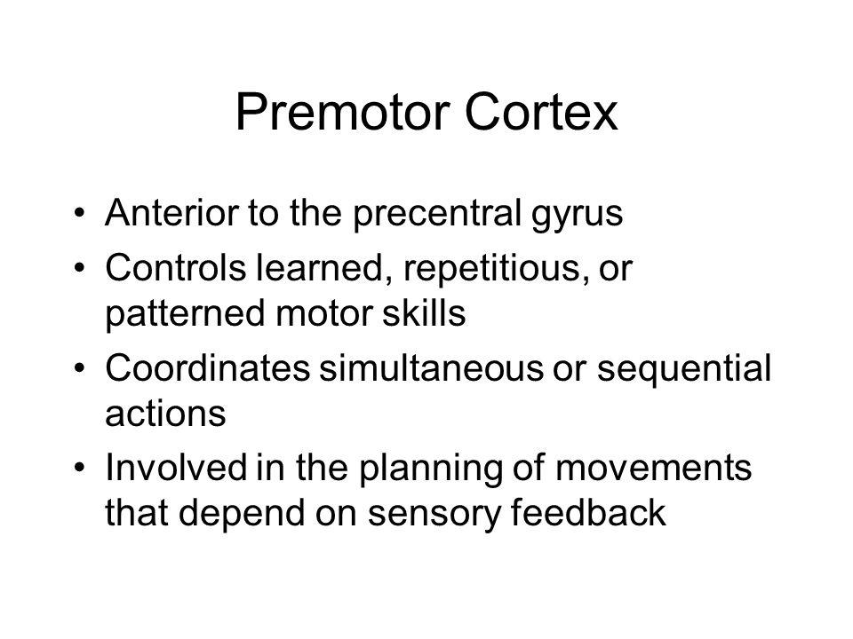 Premotor Cortex Anterior to the precentral gyrus