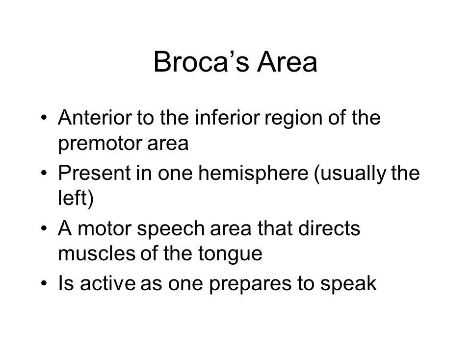 Broca's Area Anterior to the inferior region of the premotor area