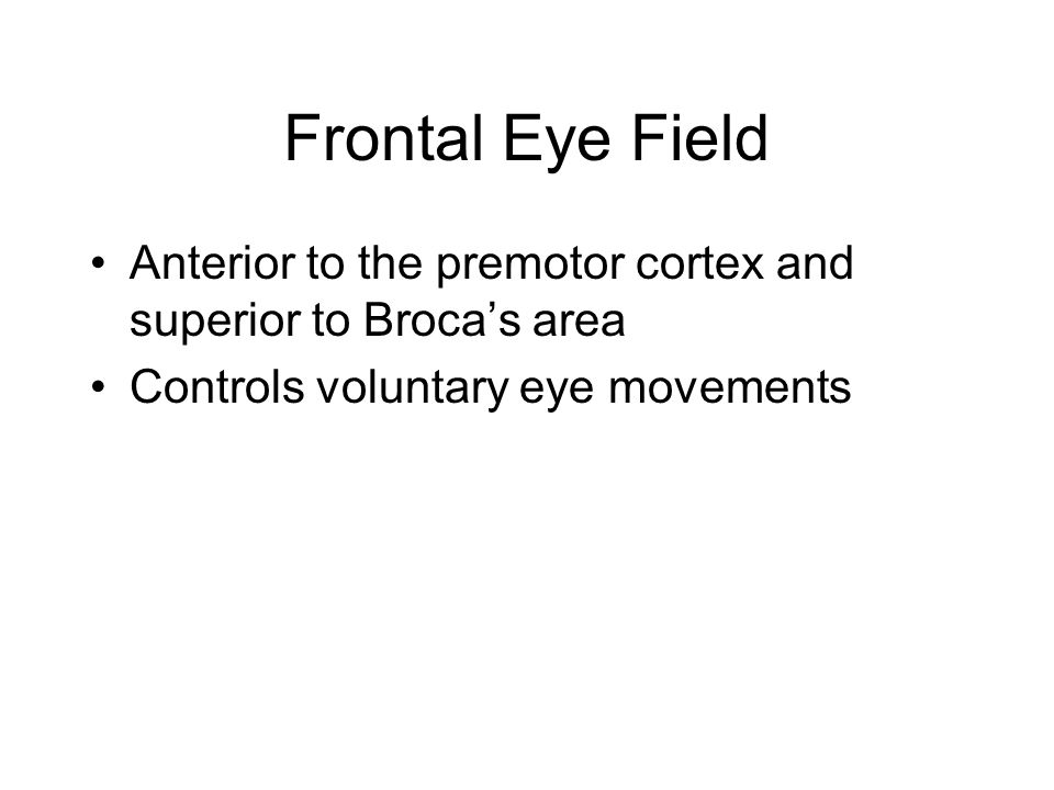 Frontal Eye Field Anterior to the premotor cortex and superior to Broca's area.