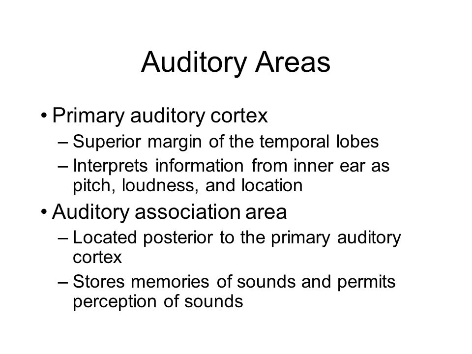 Auditory Areas Primary auditory cortex Auditory association area