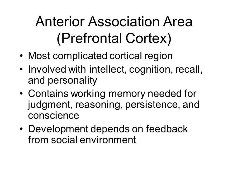 Anterior Association Area (Prefrontal Cortex)