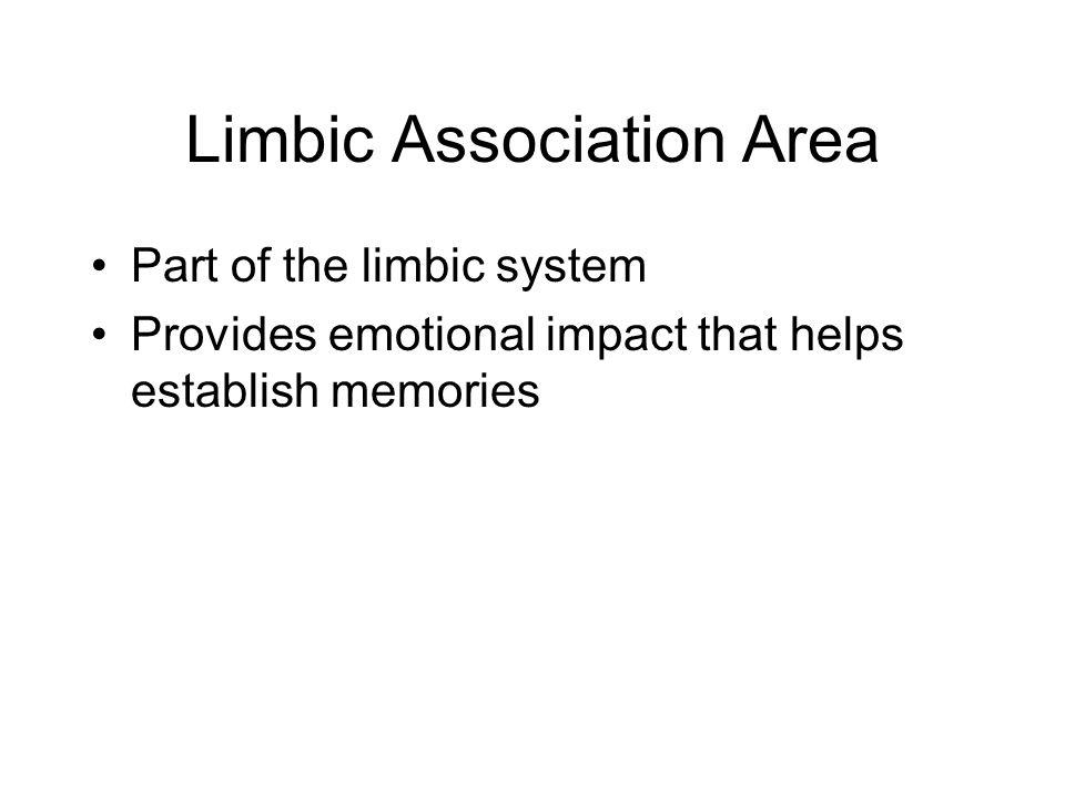 Limbic Association Area