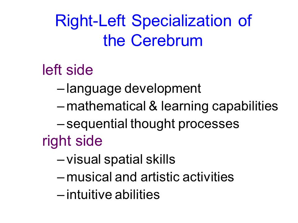 Right-Left Specialization of the Cerebrum