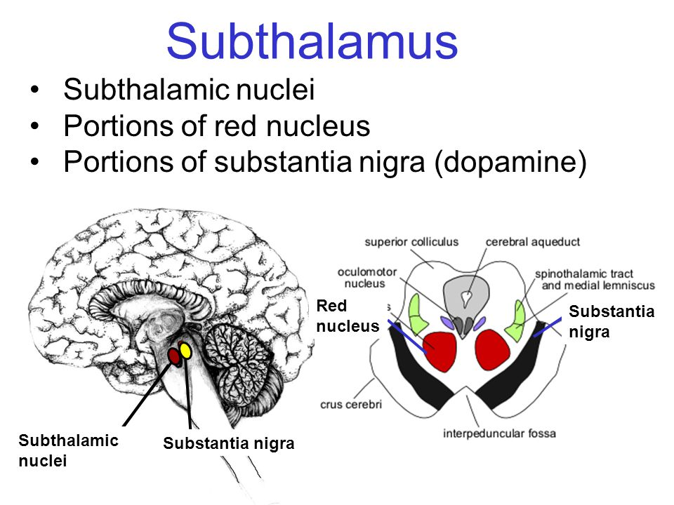 Subthalamus Subthalamic nuclei Portions of red nucleus