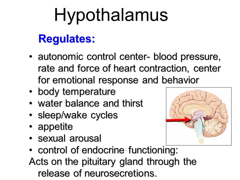 Hypothalamus Regulates: