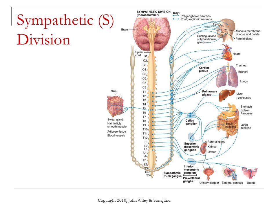 Sympathetic (S) Division