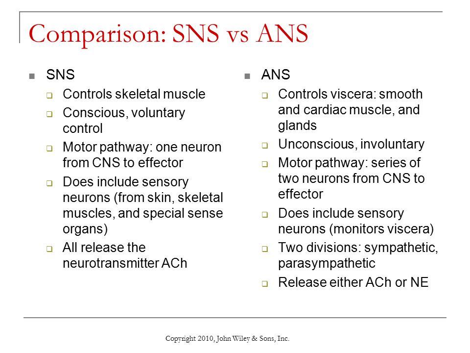 Comparison: SNS vs ANS SNS ANS Controls skeletal muscle