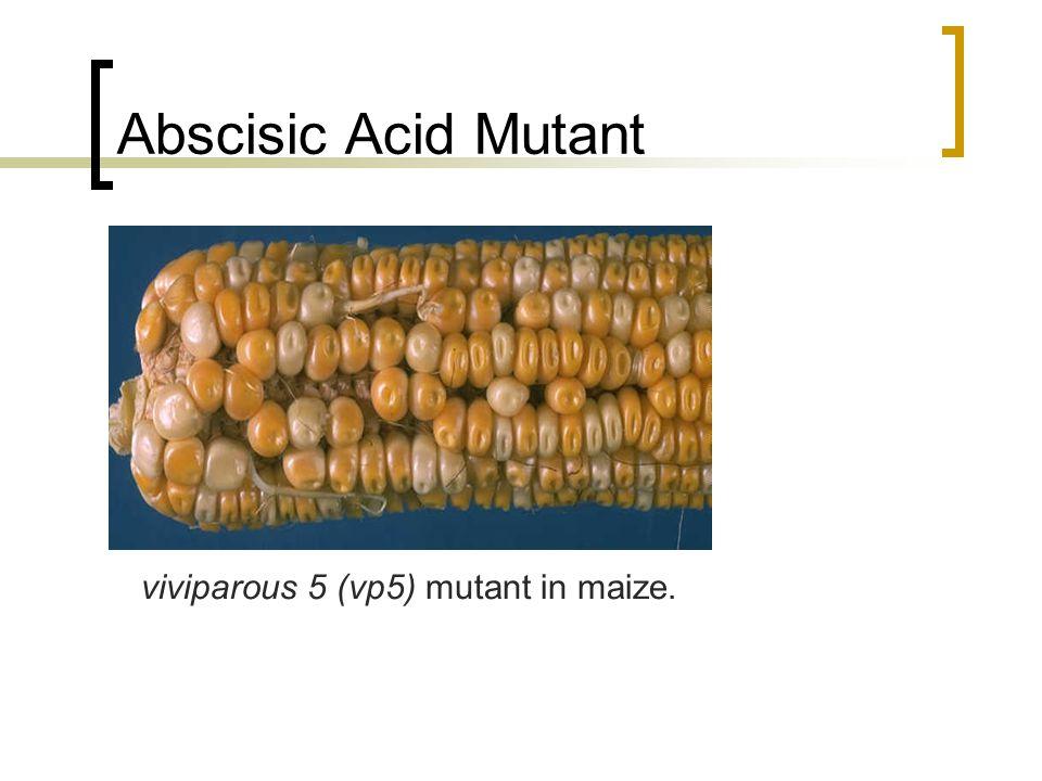 brassinosteroids effects