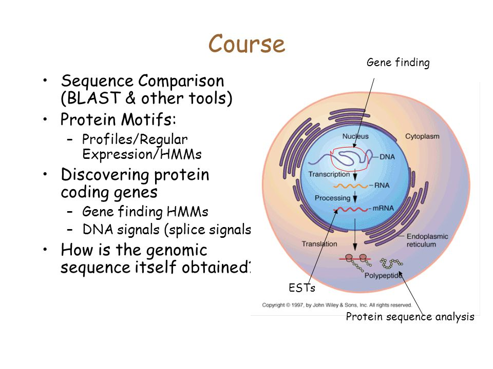 Course Sequence Comparison (BLAST & other tools) Protein Motifs:
