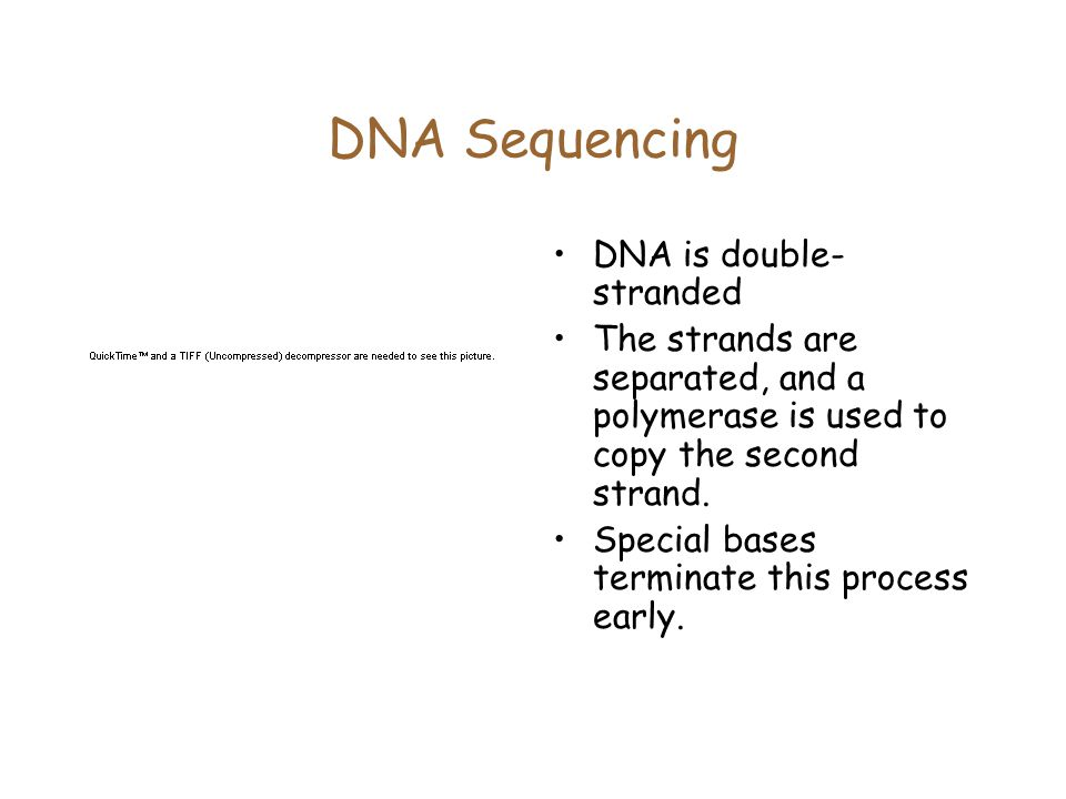 DNA Sequencing DNA is double-stranded