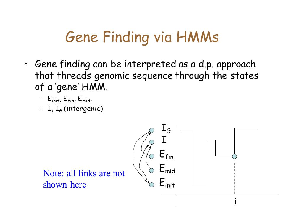 Gene Finding via HMMs Gene finding can be interpreted as a d.p. approach that threads genomic sequence through the states of a 'gene' HMM.