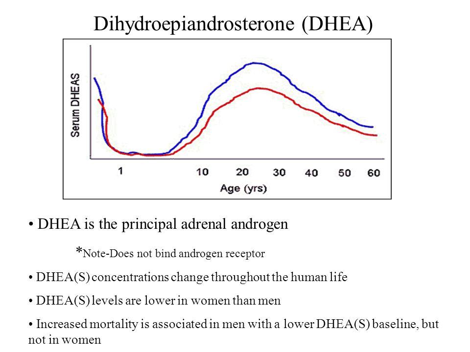 Dihydroepiandrosterone (DHEA)