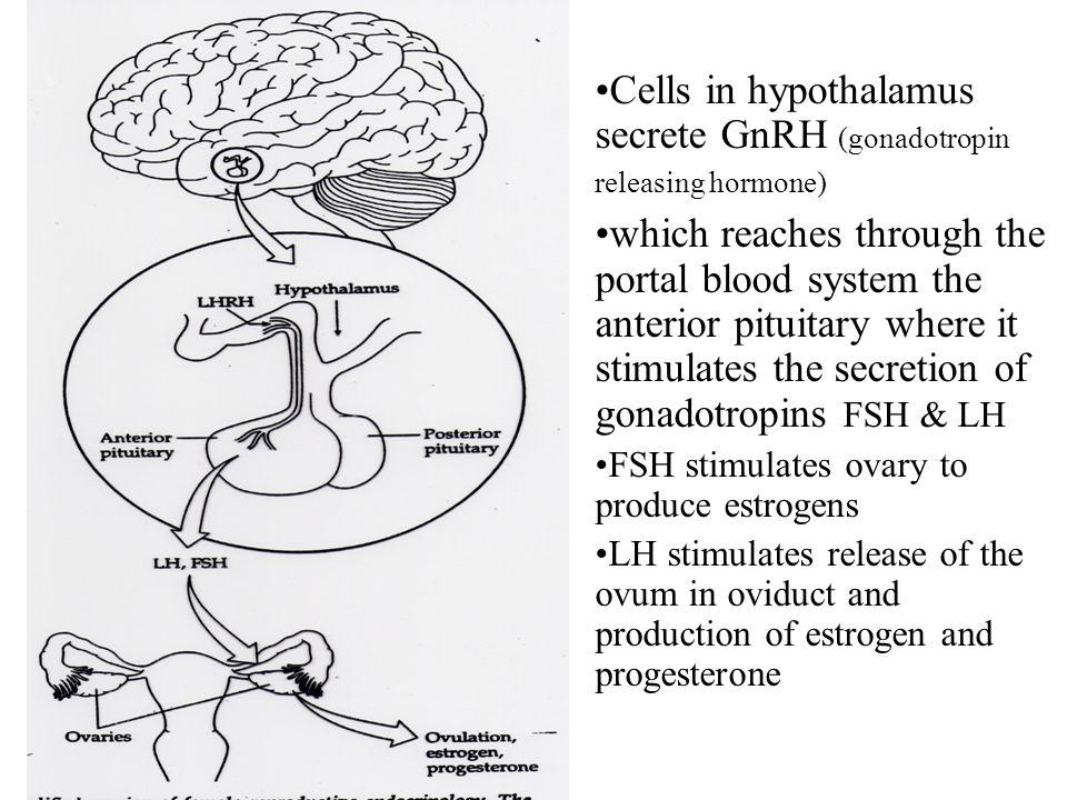 Cells in hypothalamus secrete GnRH (gonadotropin releasing hormone)