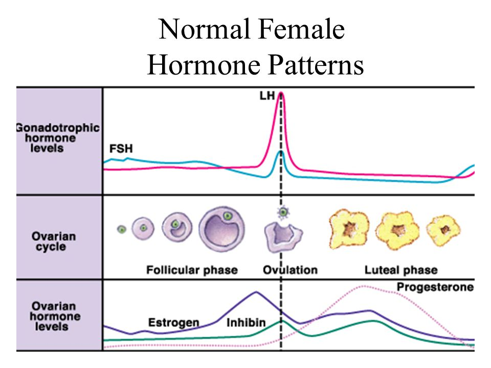 Normal Female Hormone Patterns