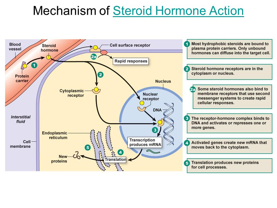 corticosteroid hormone side effects
