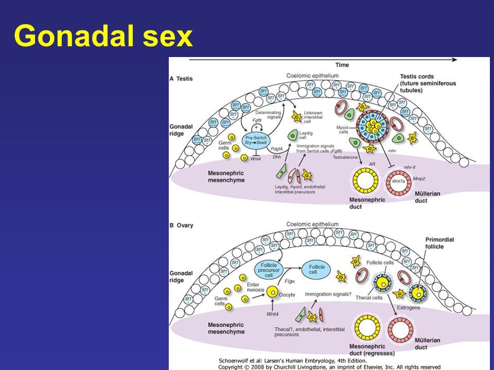 Gonadal Sex 75