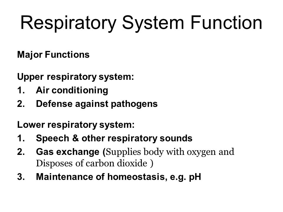 the respiratory system - ppt video online download, Cephalic Vein
