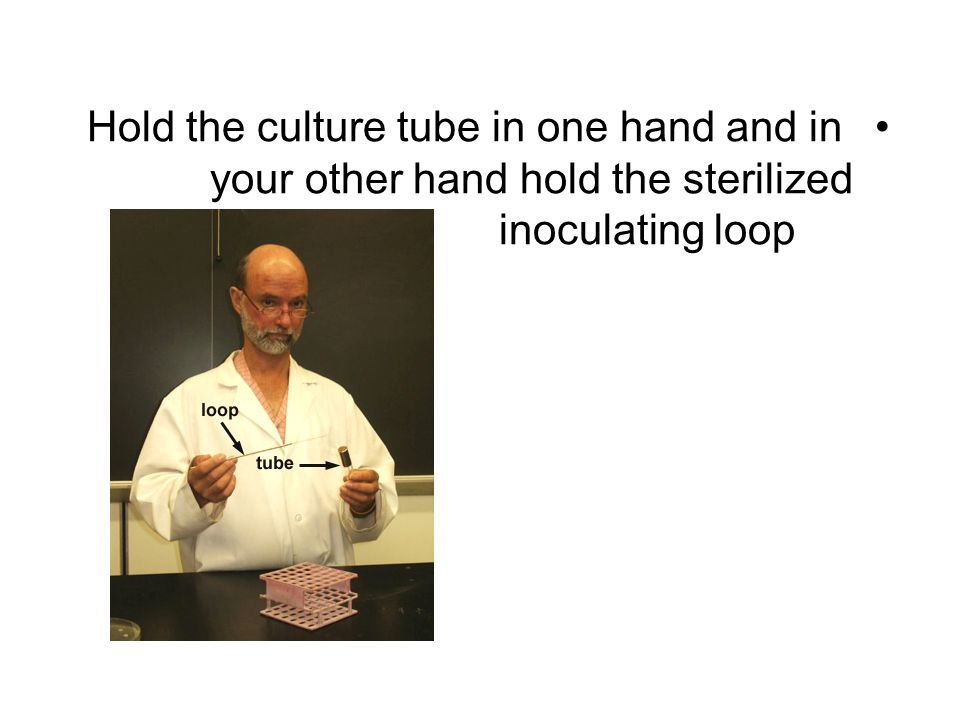 Hold the culture tube in one hand and in your other hand hold the sterilized inoculating loop
