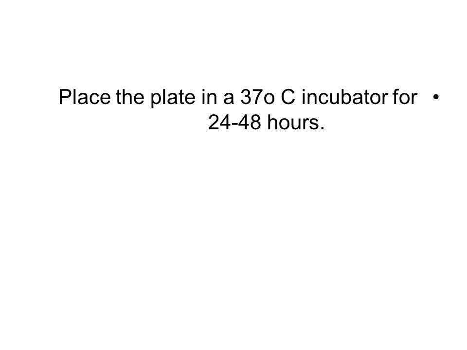 Place the plate in a 37o C incubator for hours.
