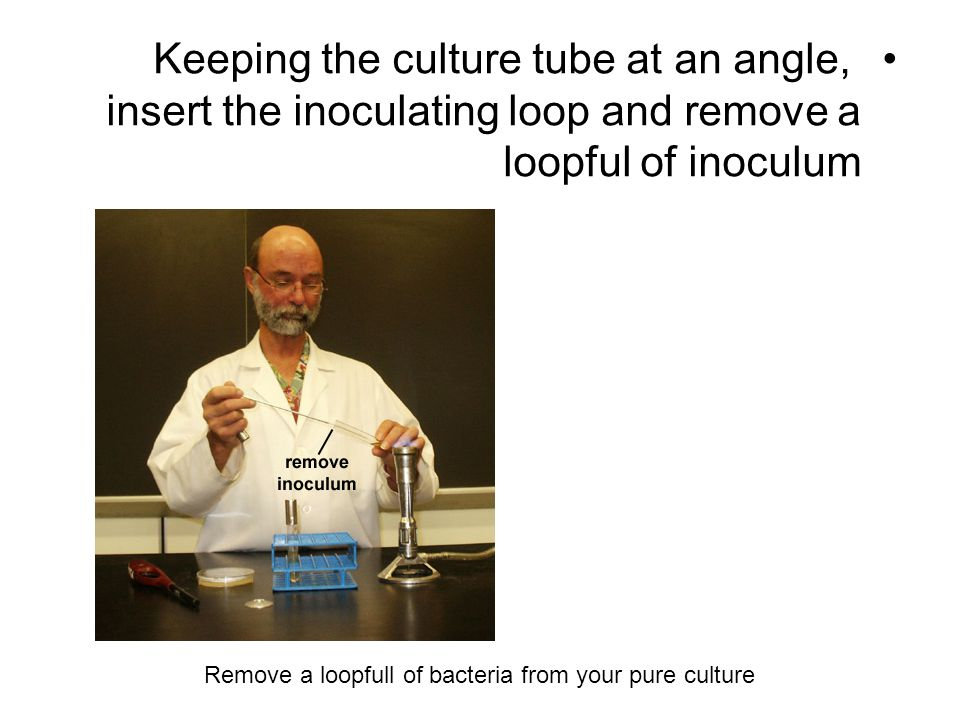 Keeping the culture tube at an angle, insert the inoculating loop and remove a loopful of inoculum