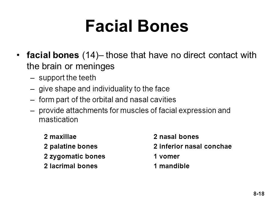 Facial Bones facial bones (14)– those that have no direct contact with the brain or meninges. support the teeth.