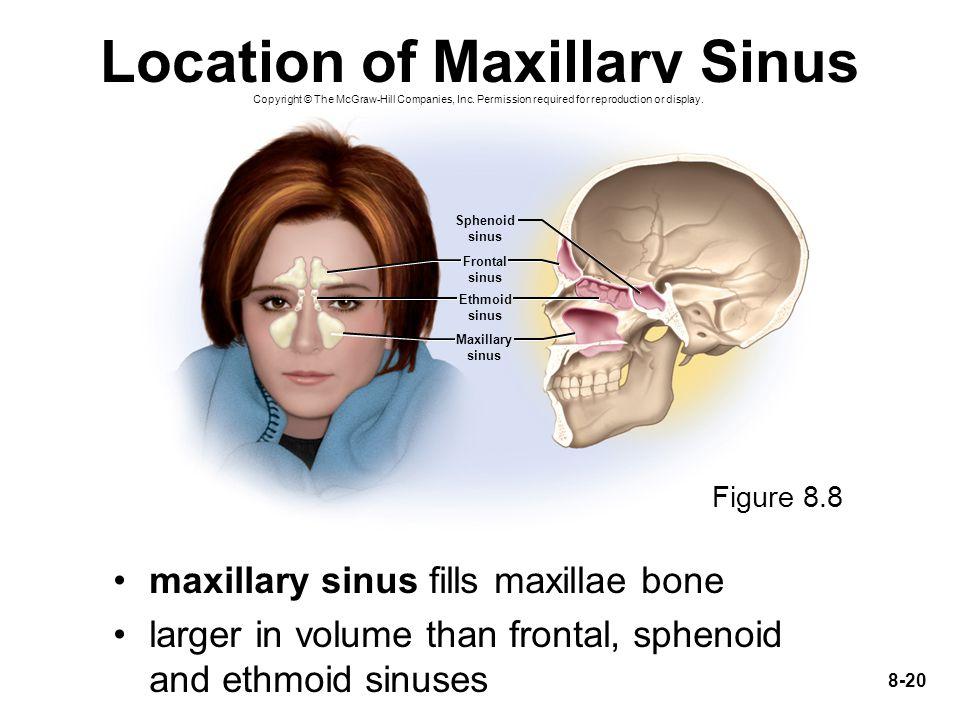 Location of Maxillary Sinus