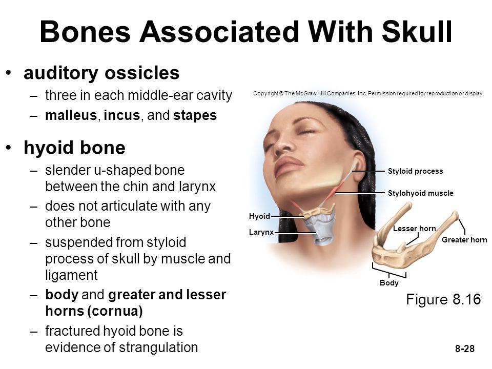 Bones Associated With Skull
